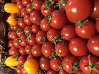 2020.7おばちゃんからトマト