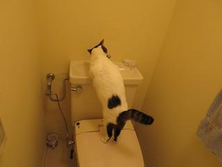お手洗いのお水なんか飲んではいけませんよ.JPG