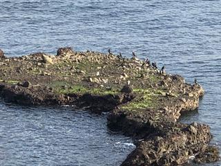 鵜の島.jpg